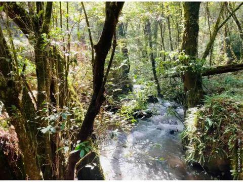 rio y bosque terreno cerro gordo