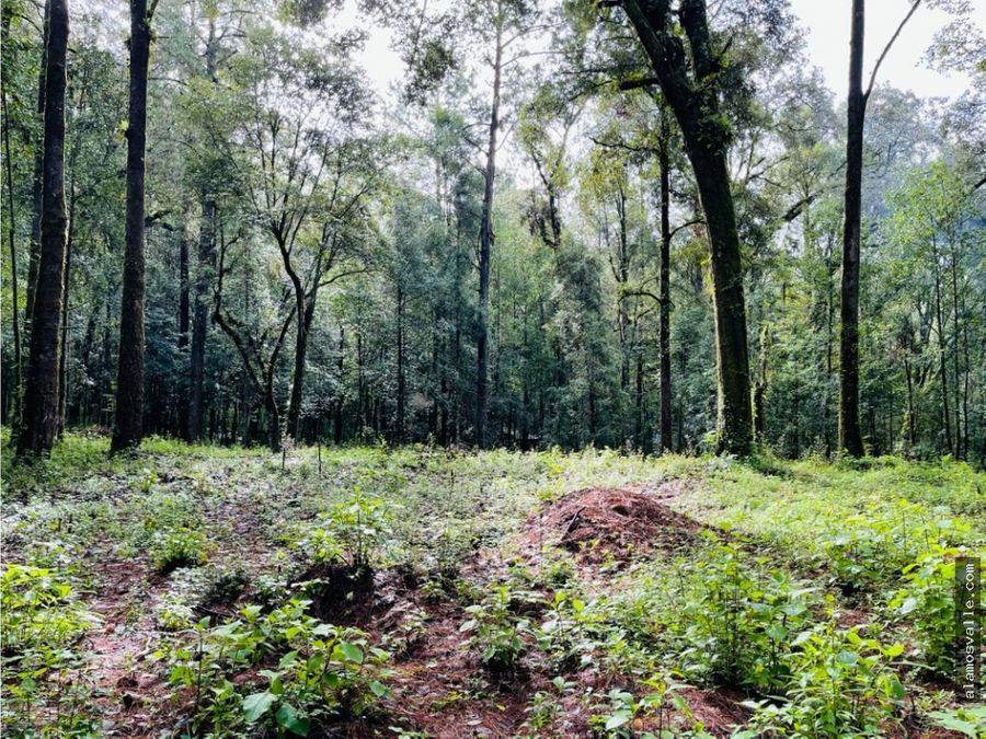 terreno rancho san simon