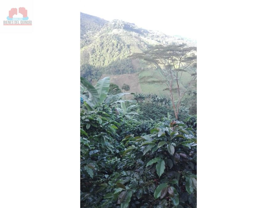 se vende finca en sevilla valle del cauca