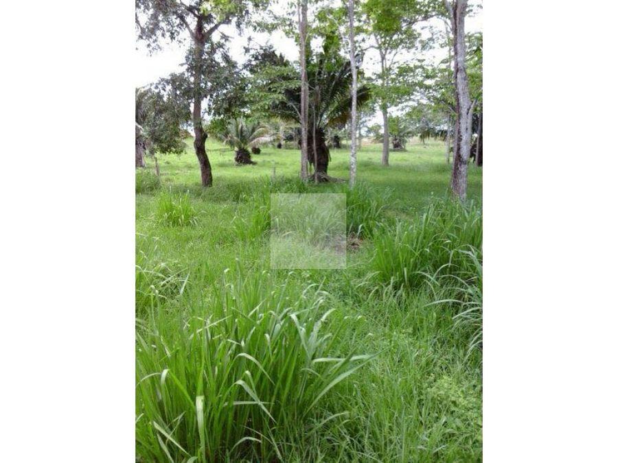 finca de 140 hectareas cerca patio bonito