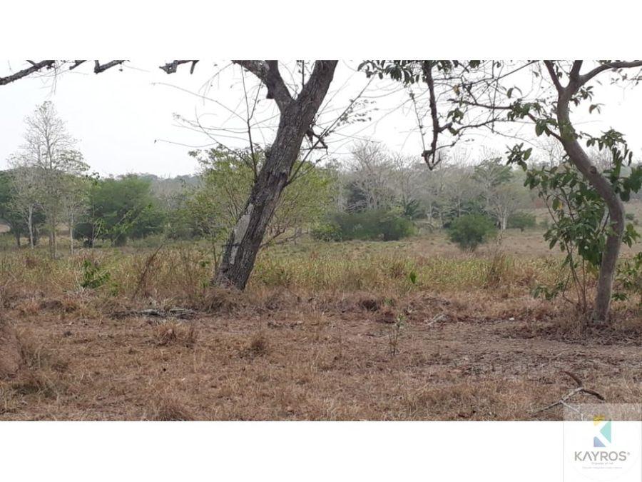 finca de 220 hectareas