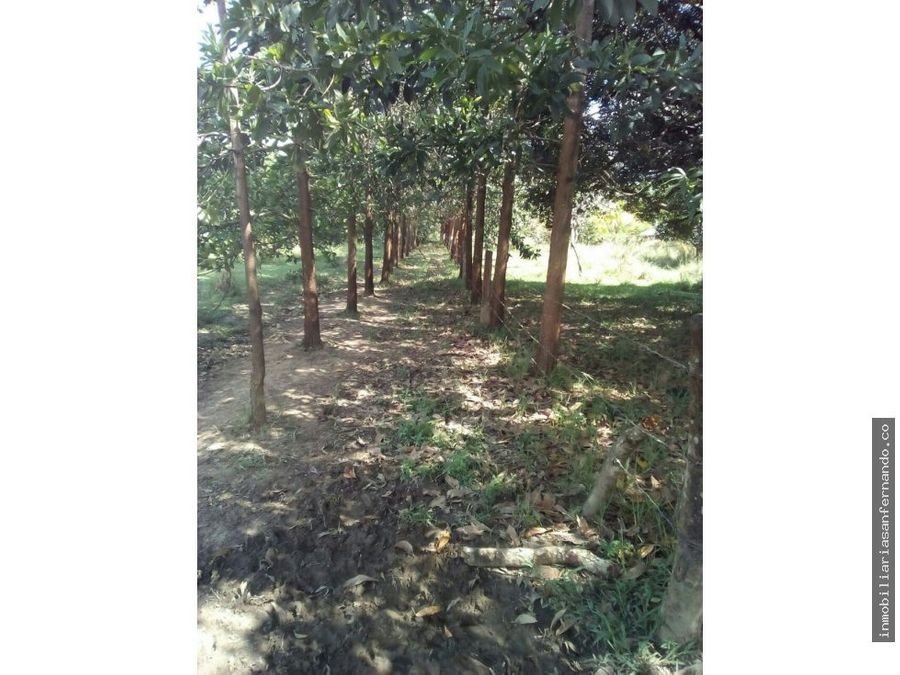 venta finca en vichada con acacia mangium