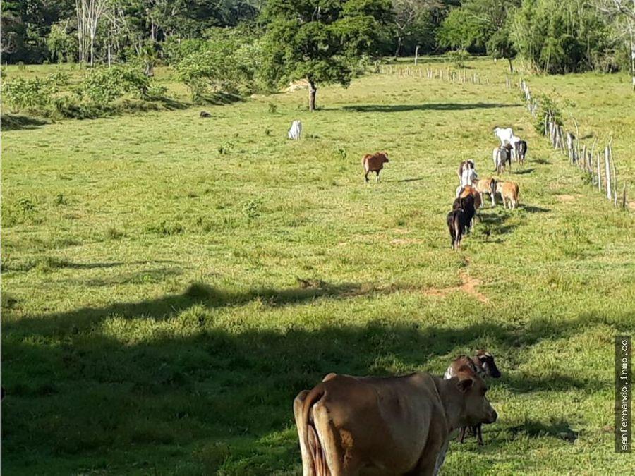 finca ganadera y agricola cerca al castillo