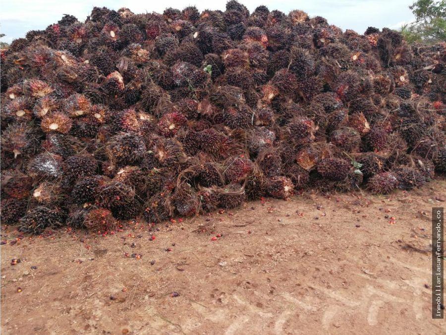 venta de finca palmera en puerto gaitan meta