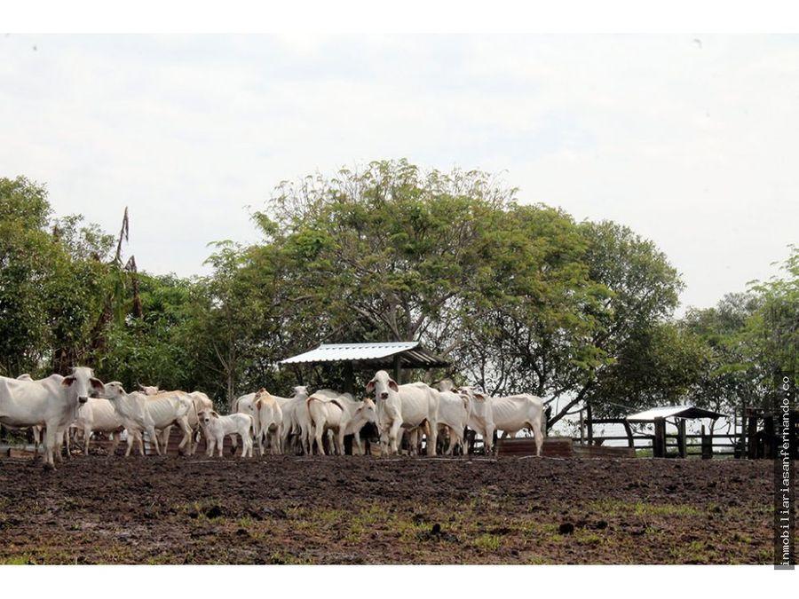 finca con ganado en villanueva casanare