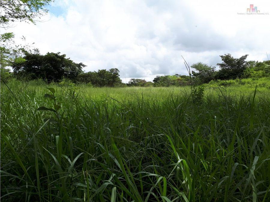 finca en venta 56 hectareas en las guias