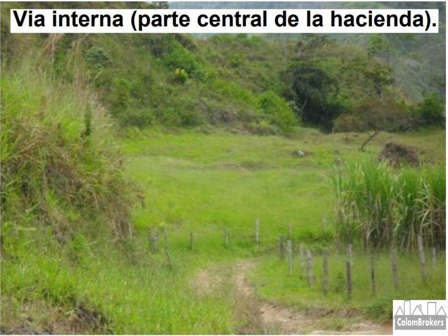 vendo finca en fresno tolima vereda el guayabo 106 h