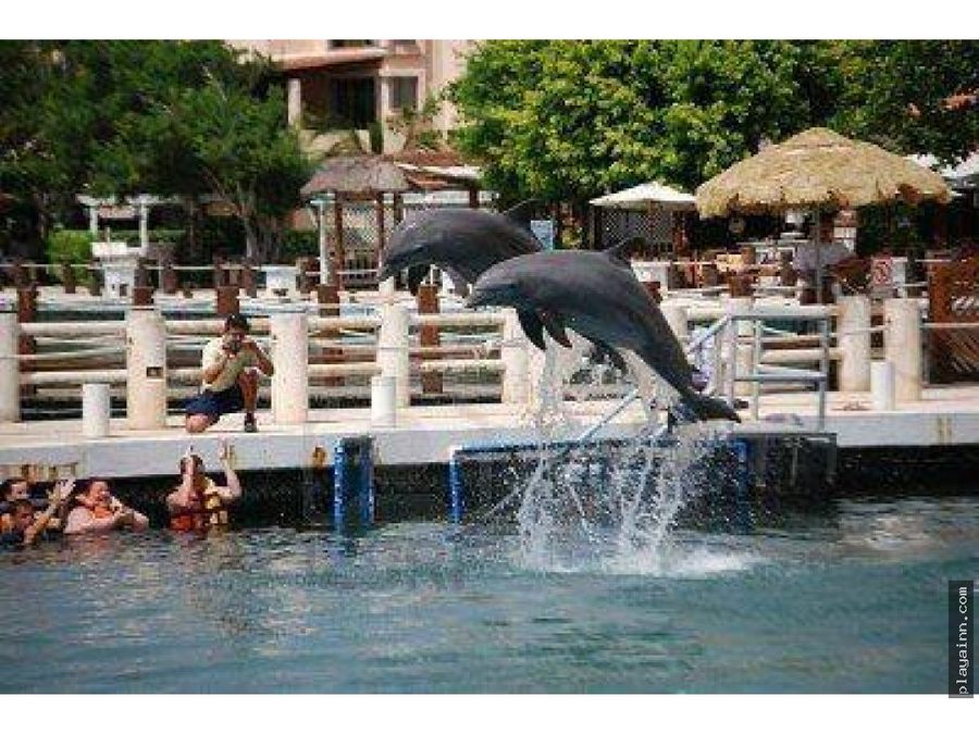 marina de puerto aventuras vista a delfines