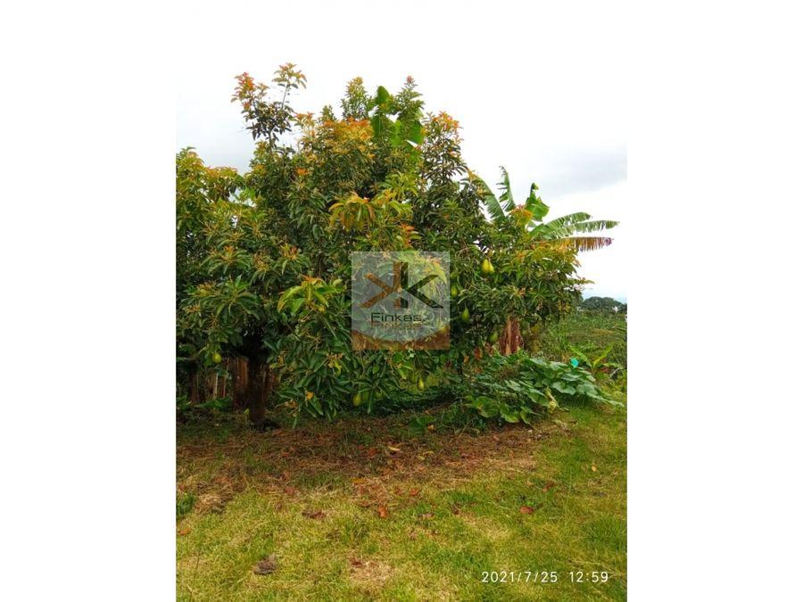 se vende finca en el naranjal quimbaya filandia