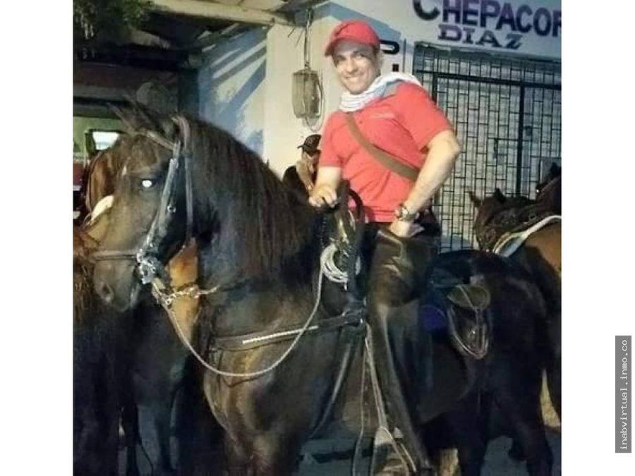 vendemos caballo trochador negro capon arjona bo