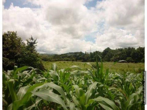 chame venta de terreno de 7 hectareas