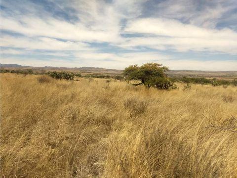 venta de 475 hectareas en rincon de romos