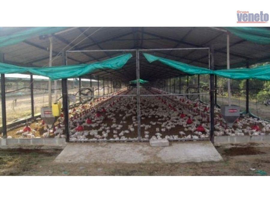 granja avicola en produccion en el estado lara