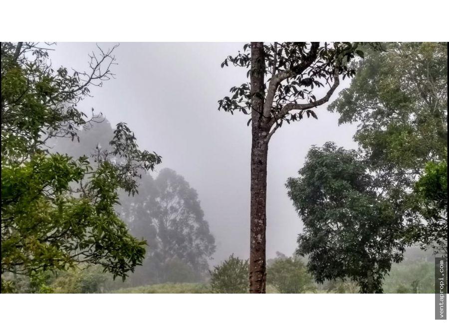 venta de finca en rionegro vereda los pinos