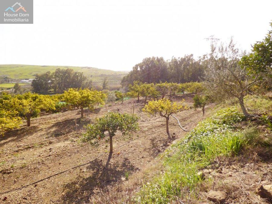 casa de campo con arboles frutales coin