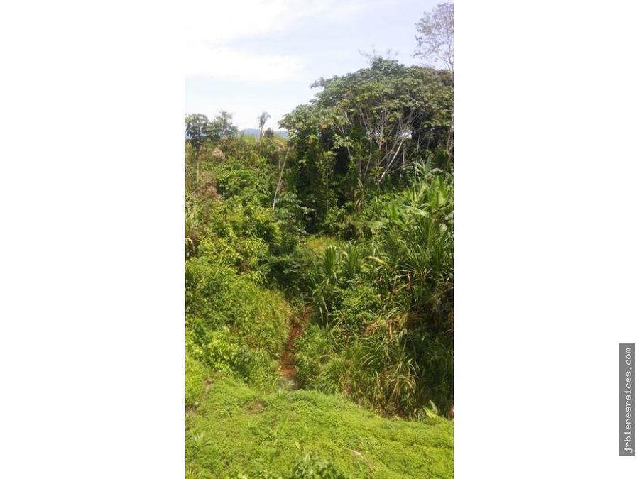 acerradero con puerto y plantaciones de madera y cacao