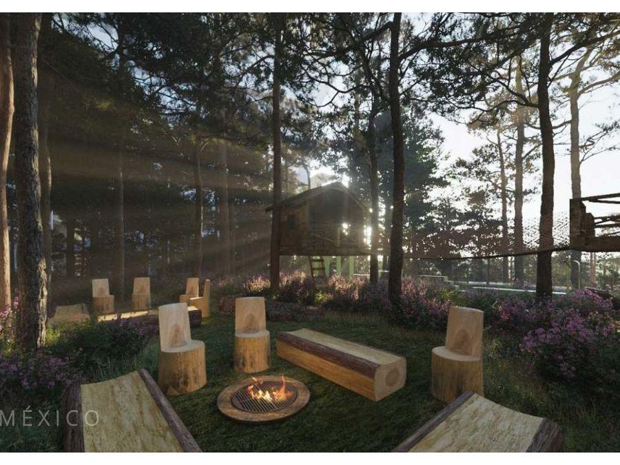 bosque real vida en armonia forest nivel del 1 al 7 b