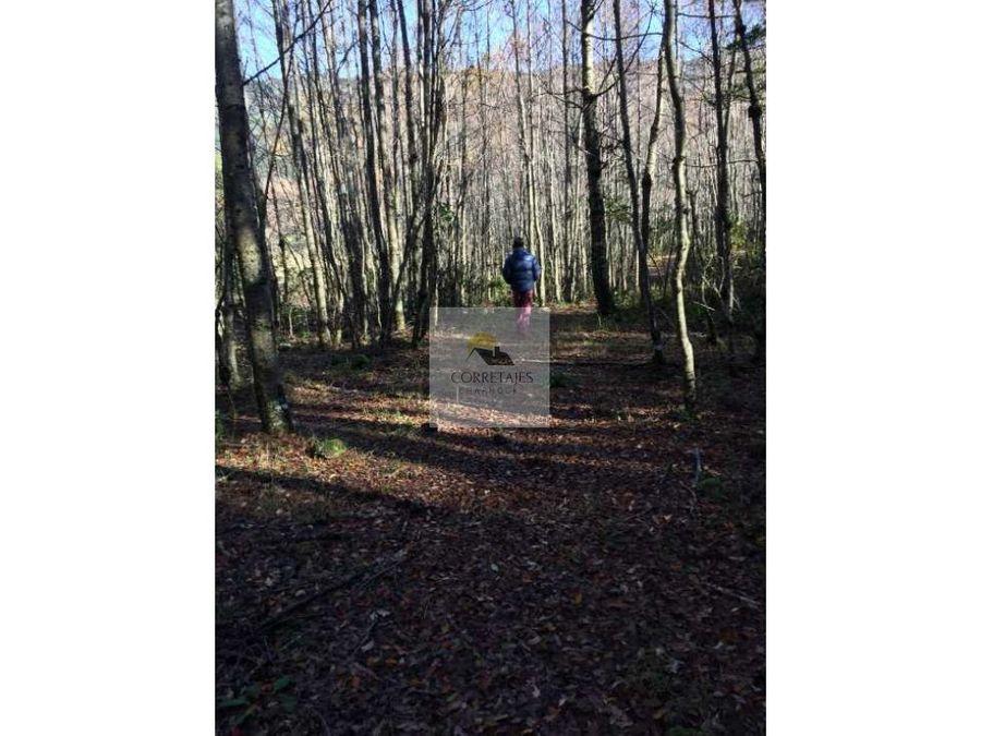 en venta dos hectareas con vertiente agua y bosque nativo palguin