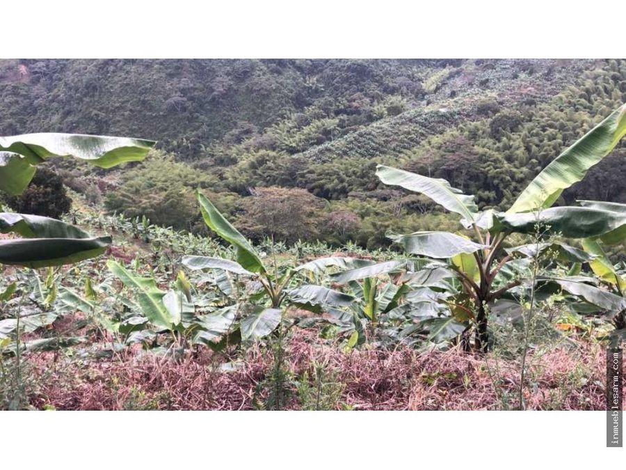 en venta finca cultivada en platano en pijao q