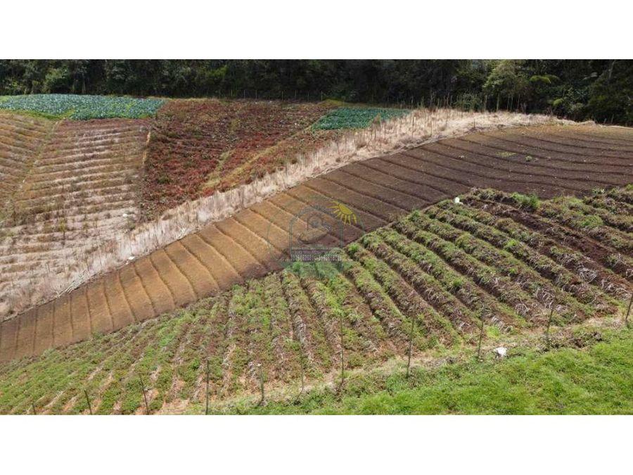 finca agricola productiva 40 hectareas santuario vereda el salto