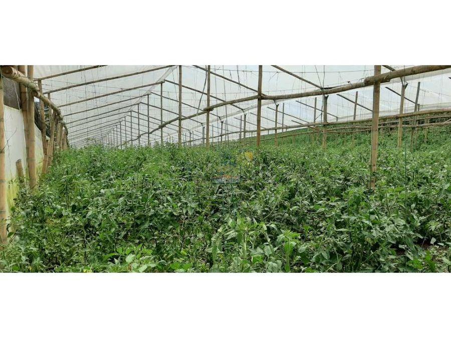 finca agricola productiva agricola o ganaderia en guarne antioquia