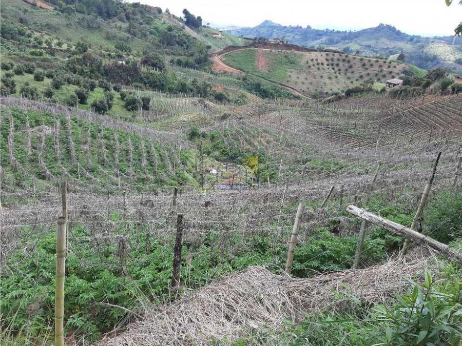 finca agricola productiva en san vicente ferrer 8000 m2 de area terre