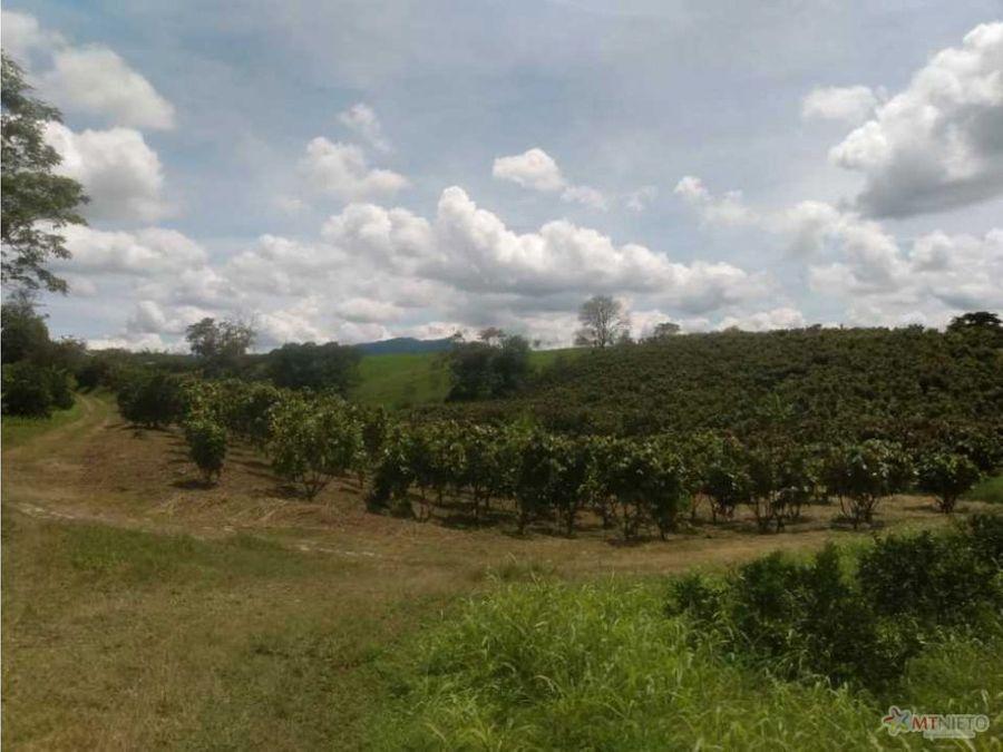 finca 601 cuadras naranja cacao baraya montenegro