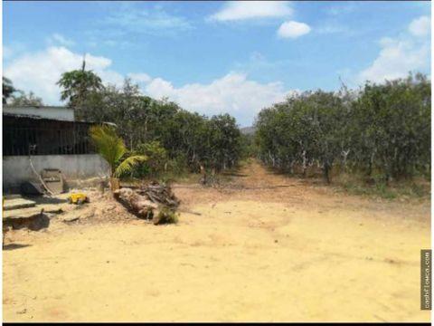 finca de 10 hectareas en miranda