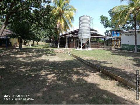 finca de 12 hectareas de gallinas ponedoras en villa de cura