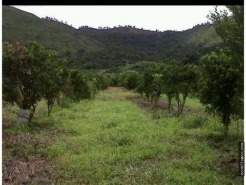 finca en yaracuy de 5 hectareas donde se extrae excelente miel