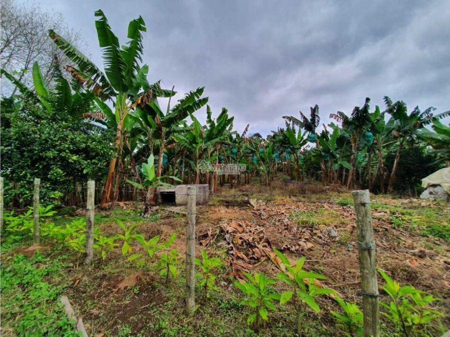 finca 8 cuadras cultivada platano y banano filandia