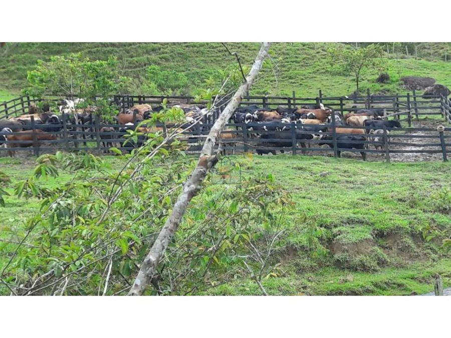 finca ganadera productiva agricola san luis ant buen acceso vehicular
