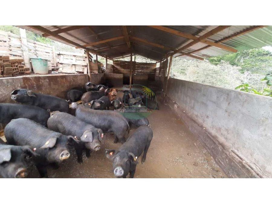 finca productiva agricola o pisicola en santuario vereda morritos