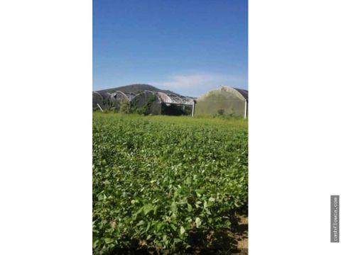 finca productiva de 20 hectareas en montalban