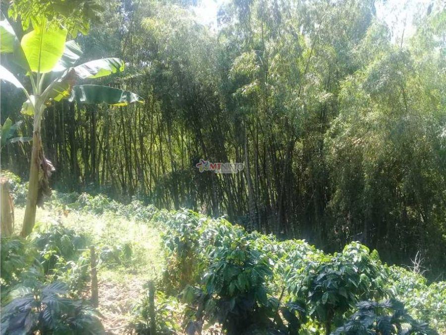 finca 10 cuadras cultivo platano ubicada en quimbaya