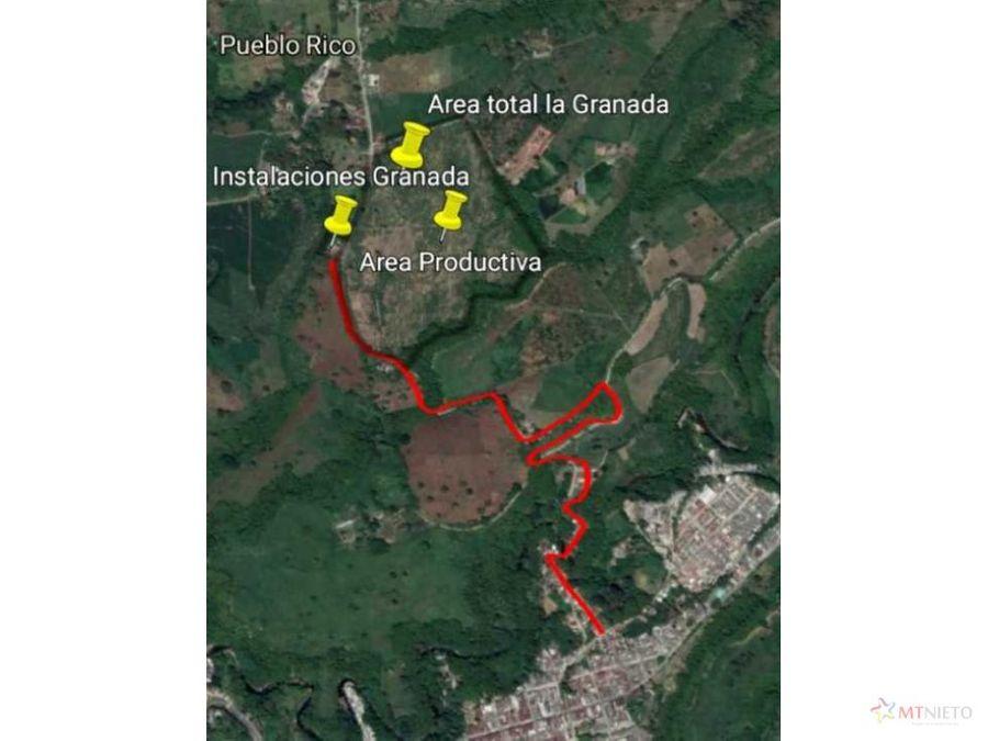 finca 23 cuadras pueblo rico quimbaya a 15 km de montenegro