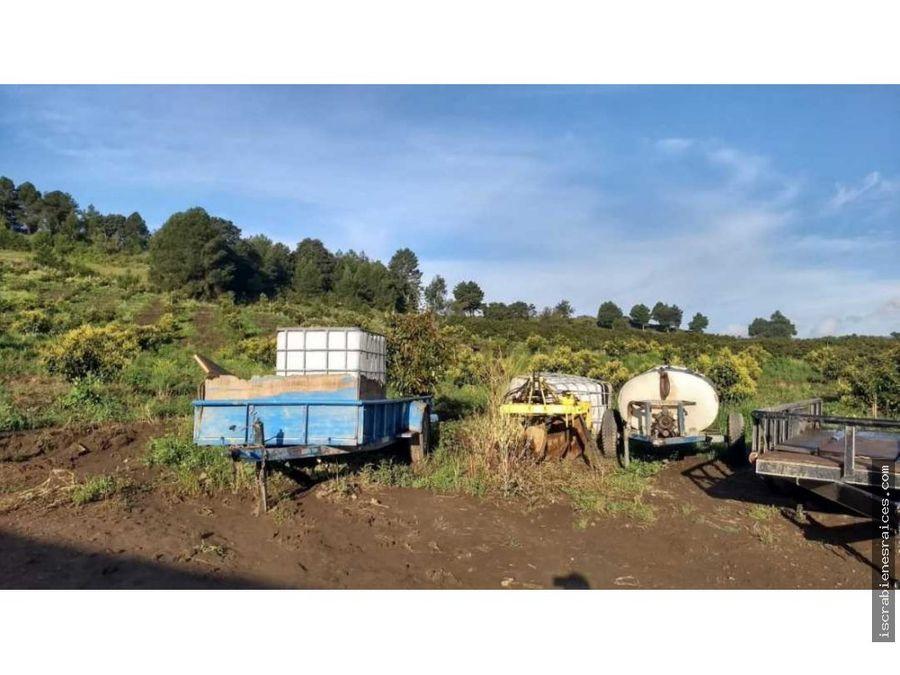 huerta de aguacates en venta en juchitepec