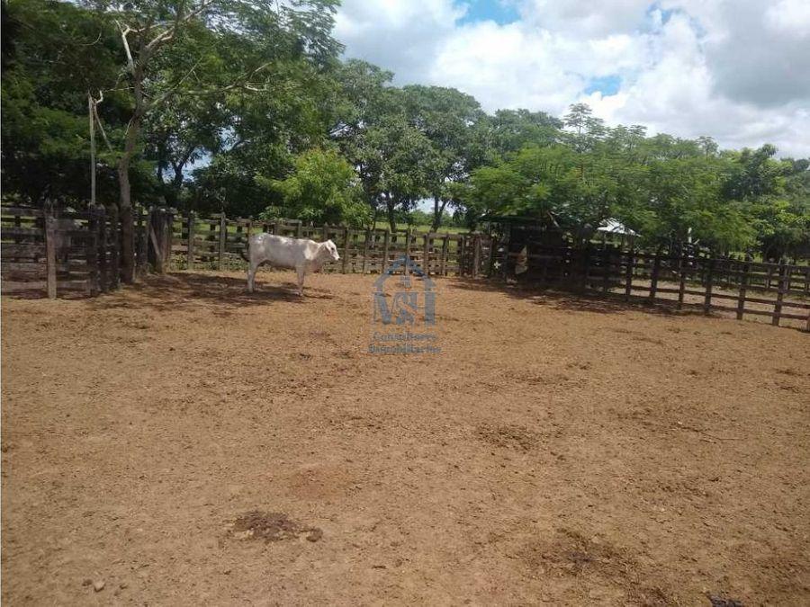 hermosa finca de 129 hectareas en venta en cerete cordoba