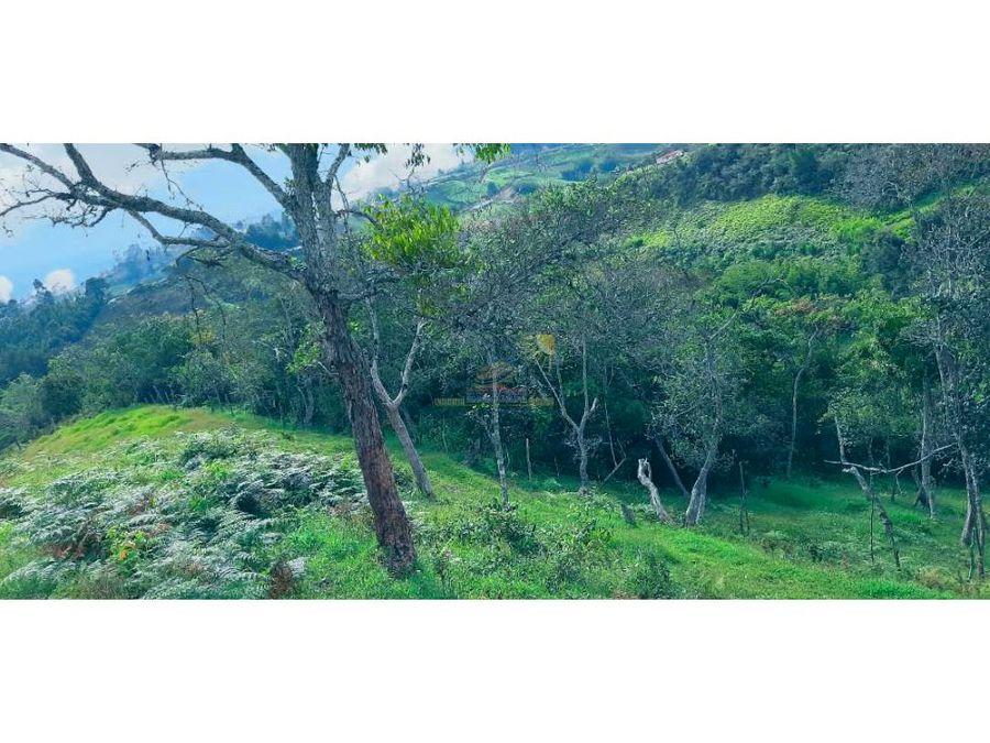 lote con exelente vista y bosque nativo marinilla vereda chochomayo
