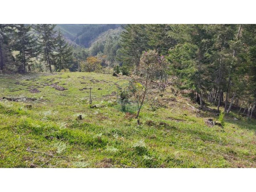lotes hermosos semi planos con una excelente vista y bosque nativos