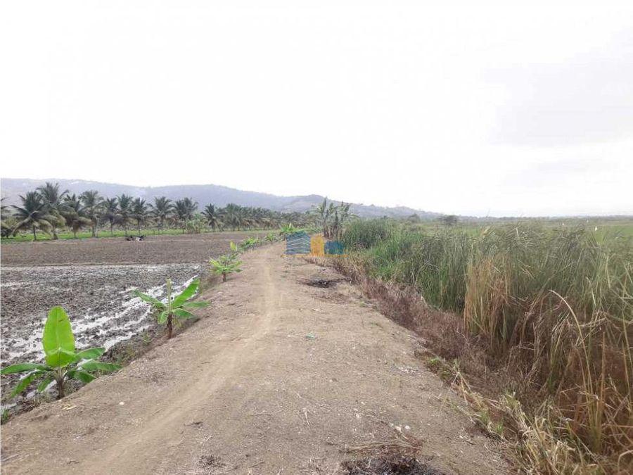 propiedad arrozera