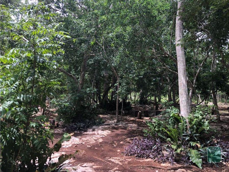 propiedad con cenote en venta