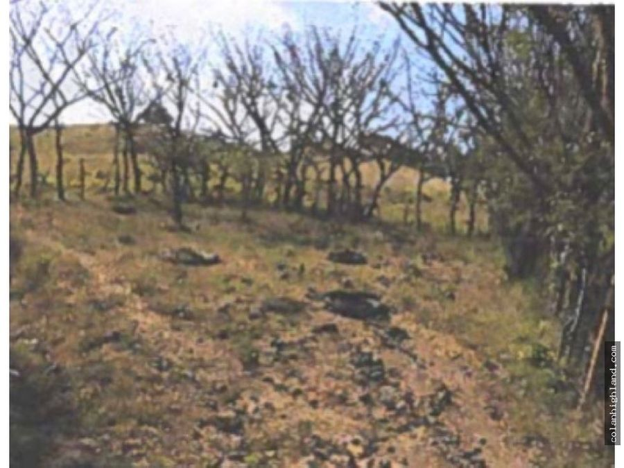 se vende finca de 18 hectareas en ocu de herrera