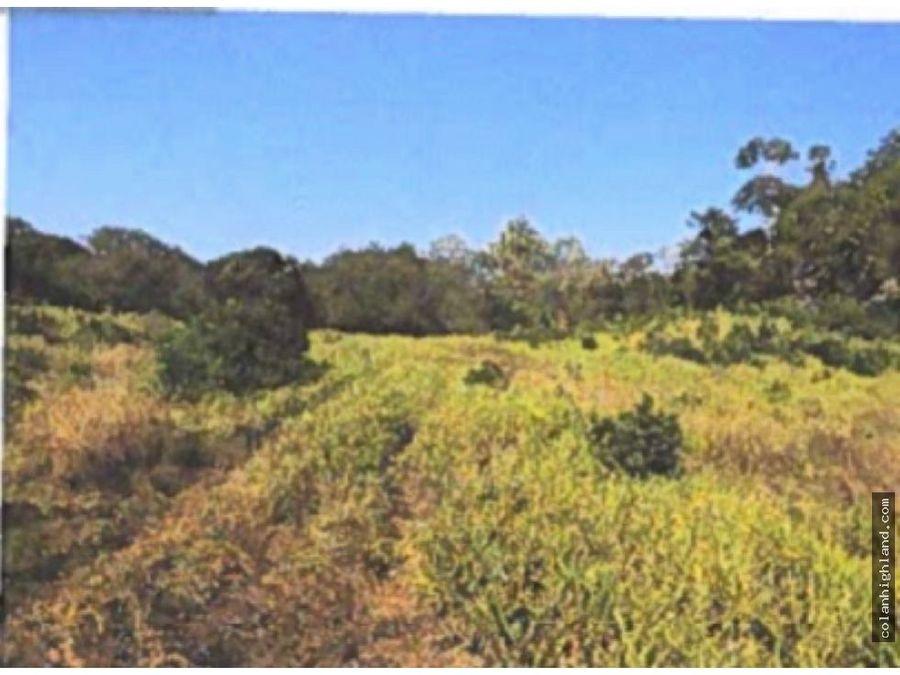 se vende finca de 233 hectareas en ocu