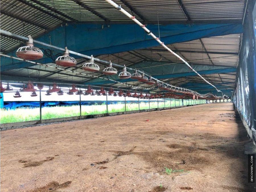 se vende granja avicola via vigirima ancoven premium
