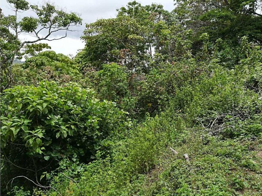 se vende terreno en san ramon de tres rios