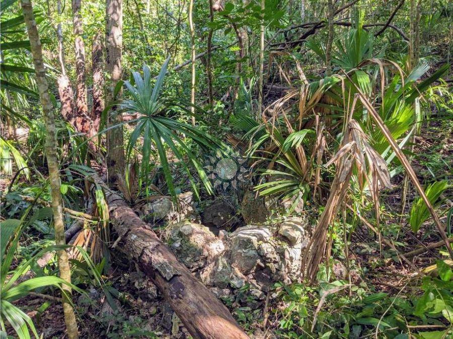 terreno de 63 ha en tinum yucatan