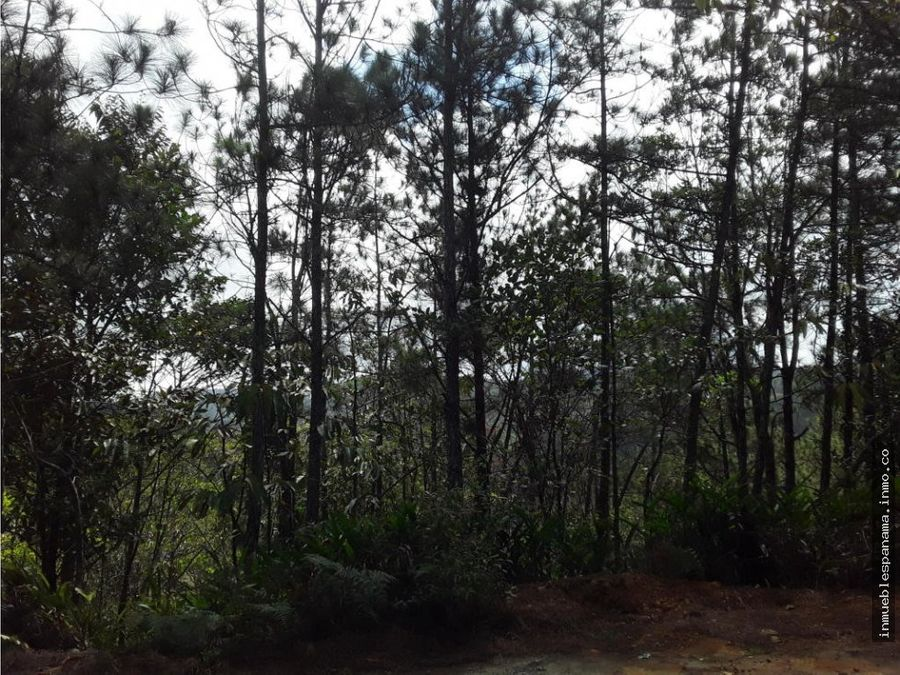 terreno en arrendar cerro azul rah pa 19 4774