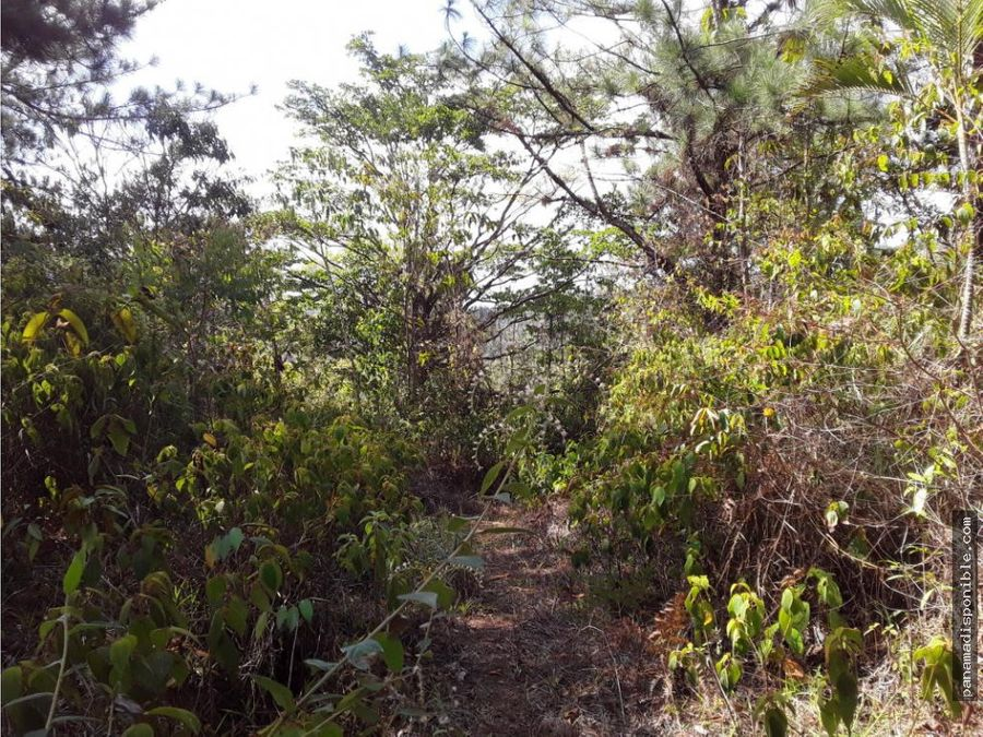 terreno en arrendar cerro azul rah pa 20 10928
