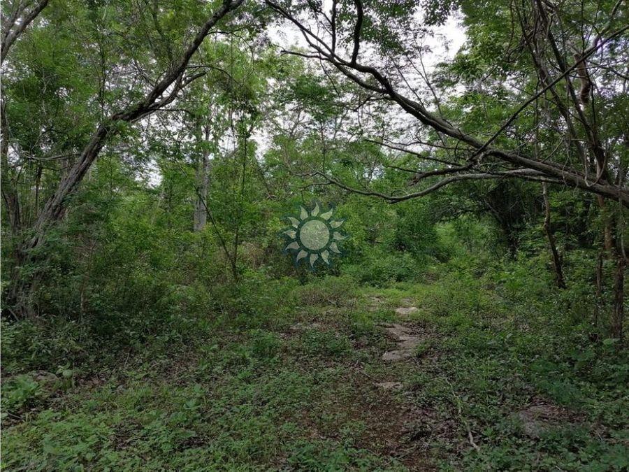 terrenos campestres en la zona norte de valladolid yucatan